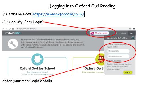Owl 1 (2)